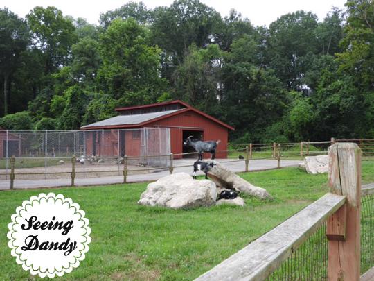suson park goats