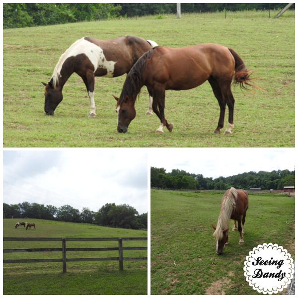 suson park horses