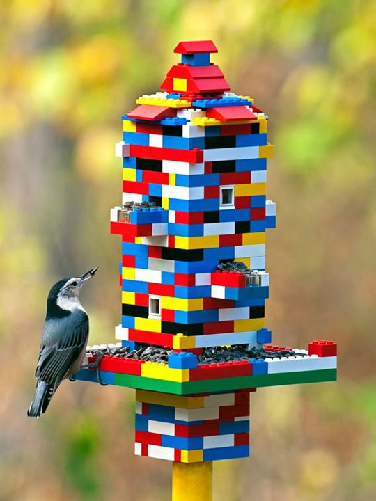 Easy to make DIY bird feeders out of LEGO bricks with bird eating.