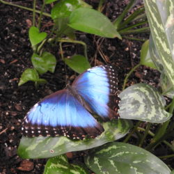 Why Kids Love The Butterfly Palace