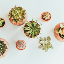 7 Succulents You Can Grow Easily Even If You're A Newbie