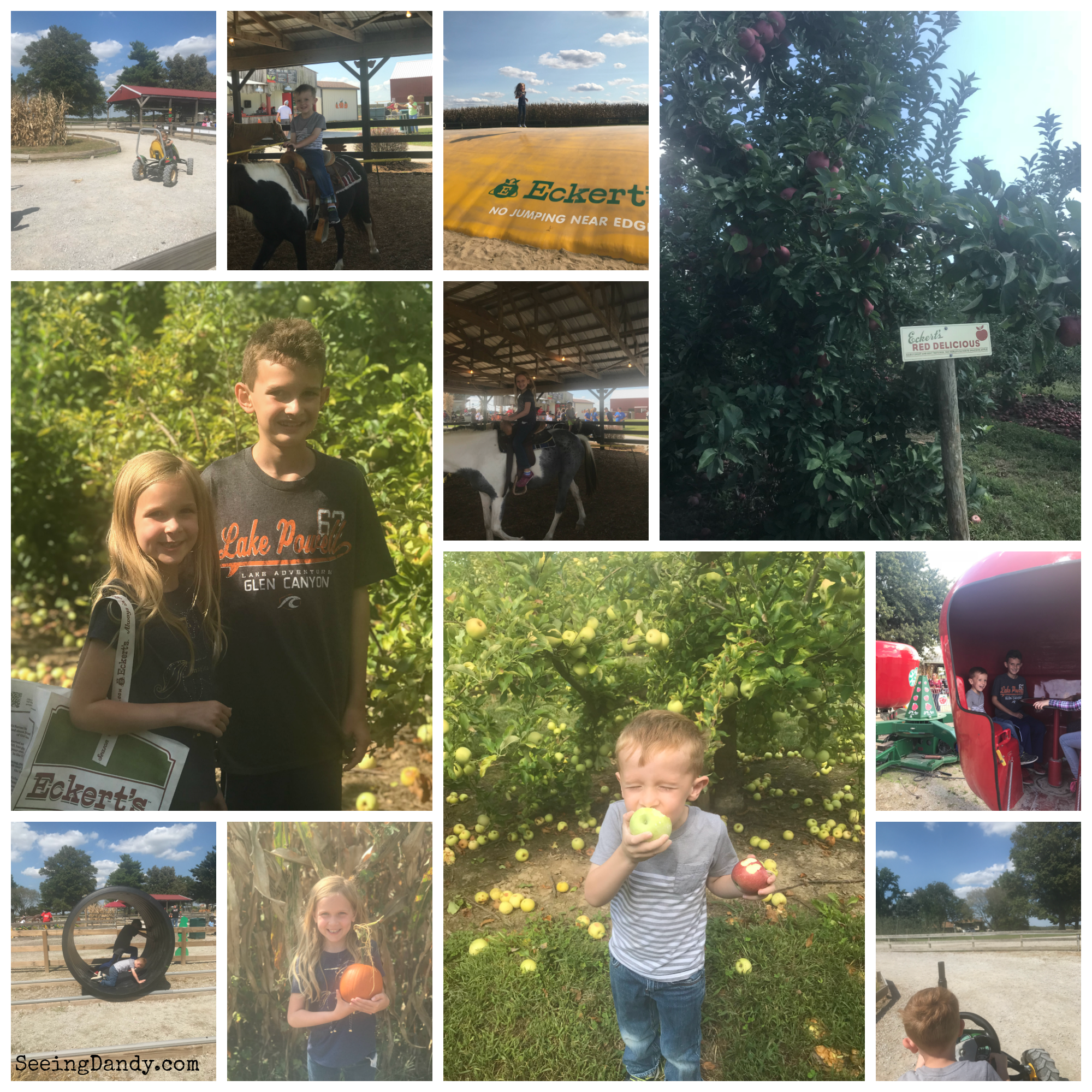 Family fun at Eckerts and picking apples to make foil baked apples.