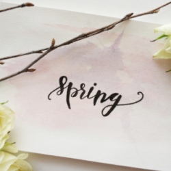 Spring hand lettering with white roses and twigs.