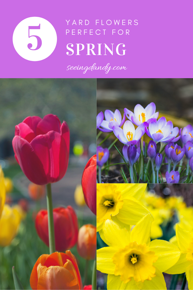 Gorgeous spring yard flowers that are easy to grow.