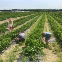 Make Family Memories At Eckert's Farms