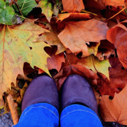 Trendy fall ballet flats with changing leaves.