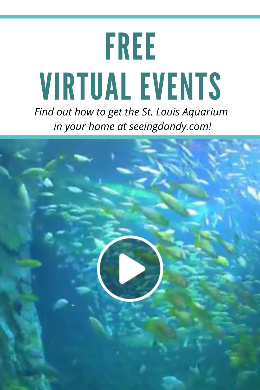 Free fun St. Louis Union Station aquarium virtual events