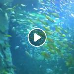 St. Louis Union Station Aquarium Virtual Events