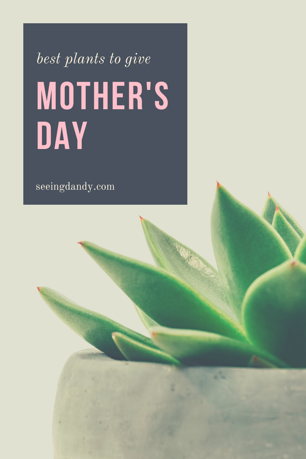 best plants for Mother's Day