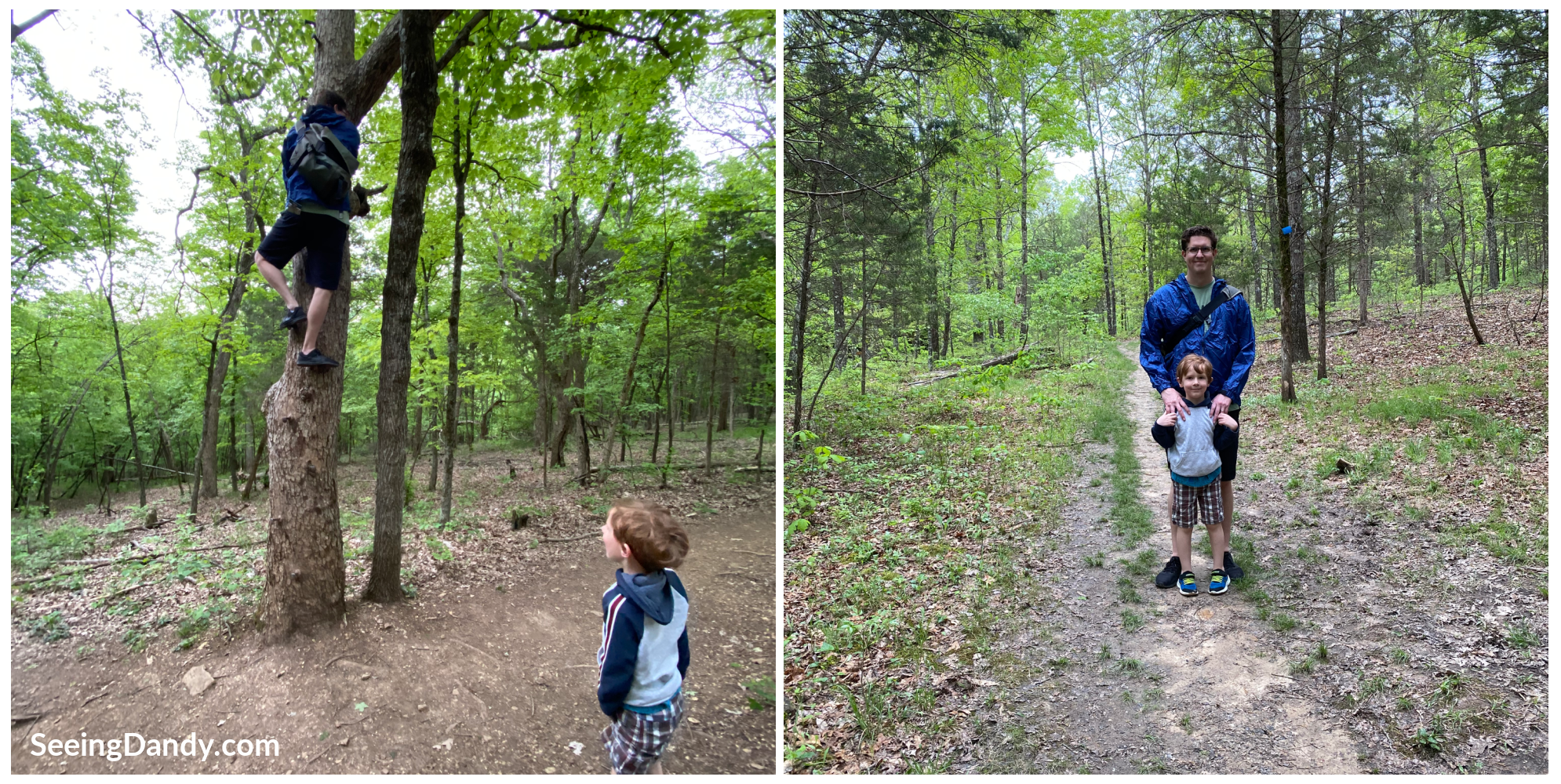 family hiking, st. louis family, hiking adventures, hiking trail, tree climbing