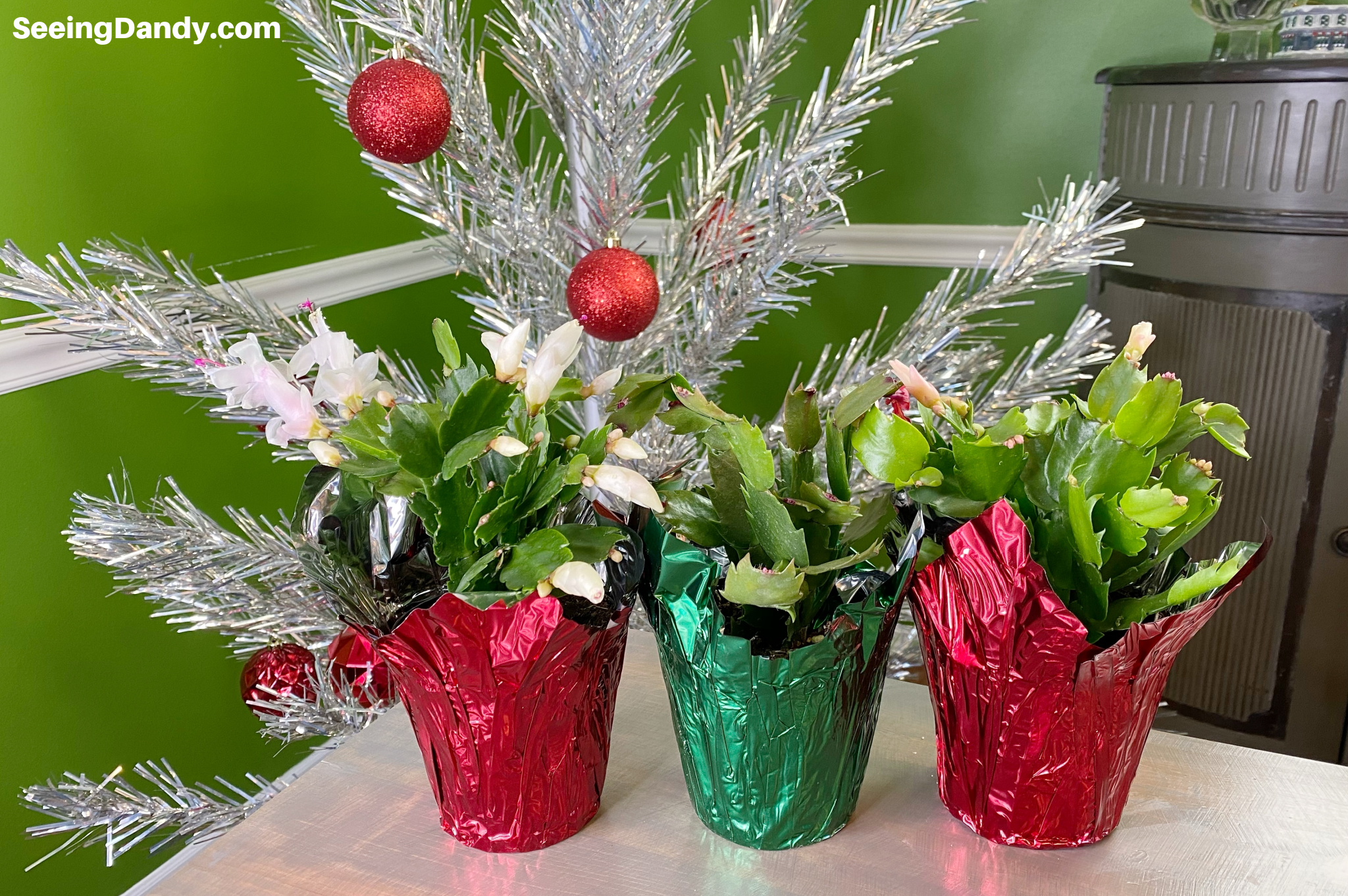 christmas cacti, trader joes plants, vintage christmas tree, farmhouse style dining room, gift idea, holiday decorations
